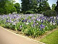 Orléans - parc floral (129).jpg
