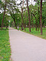 Ostroleka-park7.jpg