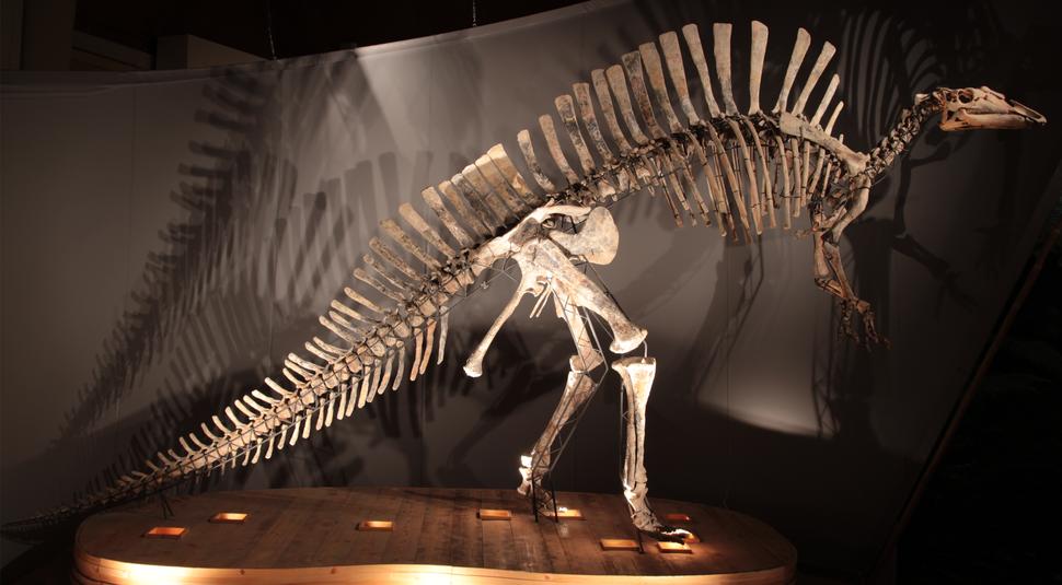 Ouranosaurus MSNVE 3714