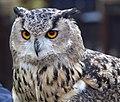 Owl5a (5087138550).jpg