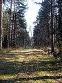 Příroda poblíž Salaspilsu (4).jpg