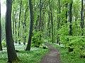 P1060699 Bärlauchblüte im Teutoburger Wald.JPG