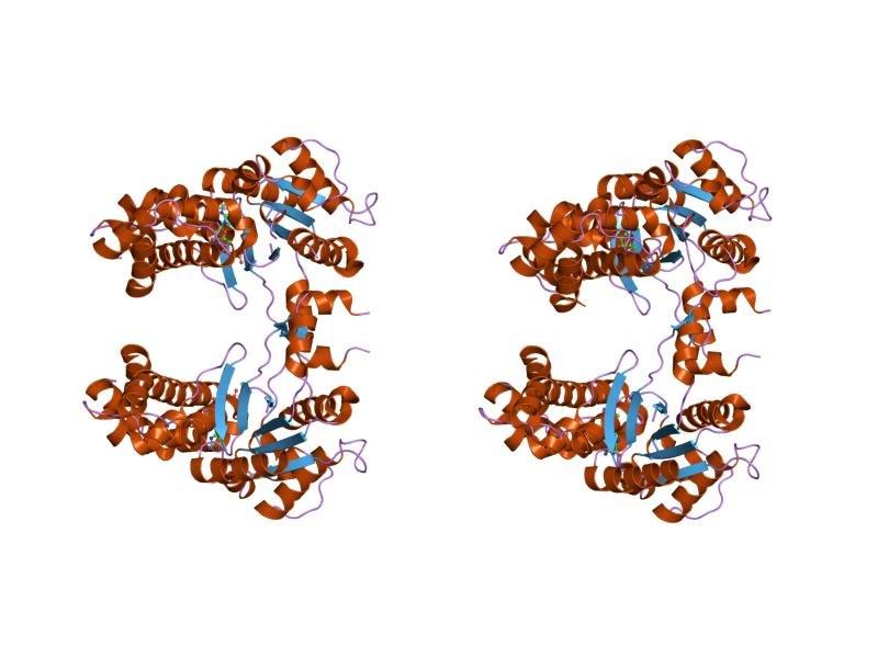 PDB 1y3a EBI