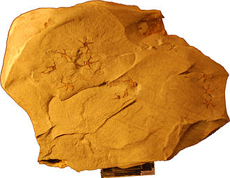 Early Triassic - Early Triassic brittle stars (echinoderms)