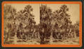 Palmettos, Fort George, by Upton & Bolles.png