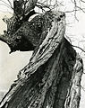 Paolo Monti - Serie fotografica (Italia, 1954) - BEIC 6346719.jpg