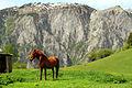 Paradise horse in Rugova.jpg