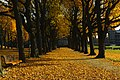 Parc Cinquantenaire autumn.jpg