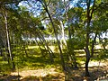 Parc Samà, zona de bosc de pins - panoramio.jpg