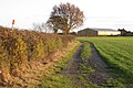 Parish boundary hedge north of Deer Park Farm - geograph.org.uk - 1589314.jpg