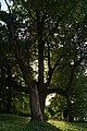 Park pałacowy w Złotym Potoku.jpg
