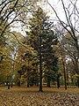 Park v Dubnici - panoramio.jpg