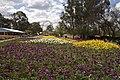 Parkes ACT 2600, Australia - panoramio (10).jpg