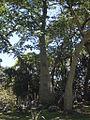 Parque del Este 2012 043.JPG