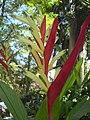 Parrot's Beak (326976491).jpg