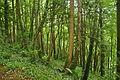 Passage Grove, Tidenham (9645).jpg