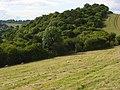 Pasture and woodland, Saunderton - geograph.org.uk - 892801.jpg