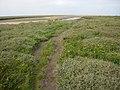 Path across the marsh - geograph.org.uk - 1024217.jpg