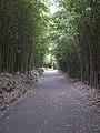 Path along Lake Furnas.jpg