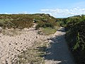 Path between Stackpole Dunes and the Lily Ponds - geograph.org.uk - 572068.jpg