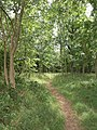 Path through woodland, Cirencester Park - geograph.org.uk - 1955829.jpg