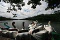 Pedalinhos da lagoa do Parque de Pituaçu.jpg