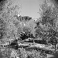Pelgrims in de tuin van de Church of the agony (Kerk van het heilige lijden) ook, Bestanddeelnr 255-5334.jpg