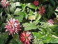 Pflanzen in den Gewächshäusern (4).jpg