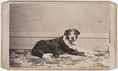 Photograph of a dog on a rug.jpg