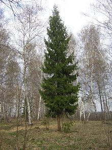 Природные зоны Земли.ppt.  Растительный мир лесов.