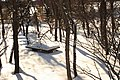 Picnic table in Wascana Park (410848576).jpg