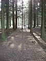 Picnic tables in the pines, Stover Park - geograph.org.uk - 404199.jpg