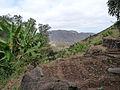 Pico da Antonia-Polyculture en terrasses (3).jpg