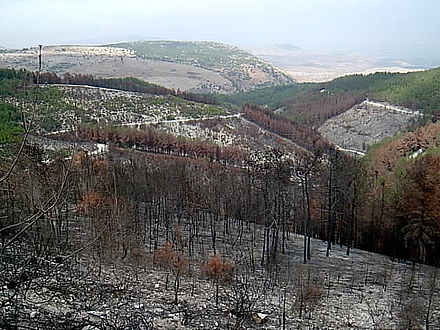 A burnt forest in northern Israel caused by Hezbollah rockets PikiWiki Israel 4484 Birya Forest.jpg