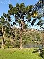 Pinheiro - panoramio (2).jpg