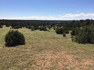 Heber-Overgaard, Arizona - Pinyon-juniper woodland west of Overgaard