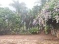 Pirenópolis - State of Goiás, Brazil - panoramio (93).jpg