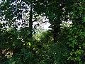 Pirna, Germany - panoramio (464).jpg