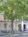 Plàtan de la plaça Universitat P1510827.jpg