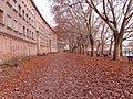 Platany nad Odrą koło Instytutu Fizyki UWr - panoramio.jpg