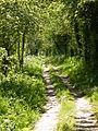 Pocklington Canal Path.JPG