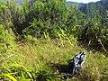 Point de vue sur grand étang depuis la plaine des palmistes - panoramio.jpg