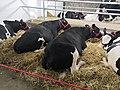 Poljoprivredni sajam 7.jpg