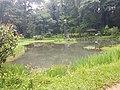 Pond View 20170706 160324.jpg