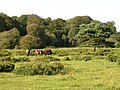 Ponies grazing south of Denny Wood, New Forest - geograph.org.uk - 28321.jpg