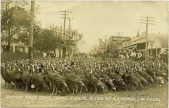 "Cuero, Texas - ""Turkey Trot"" on November 16, 1912"