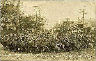 Turkey trot - Cuero, Texas, holds a turkey trot every November where hundreds of turkeys parade through the town (1912).
