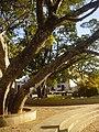 Praça Tiradentes - panoramio.jpg