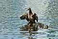Protective Duck (32130503).jpeg