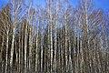 Pushkin forest - panoramio.jpg